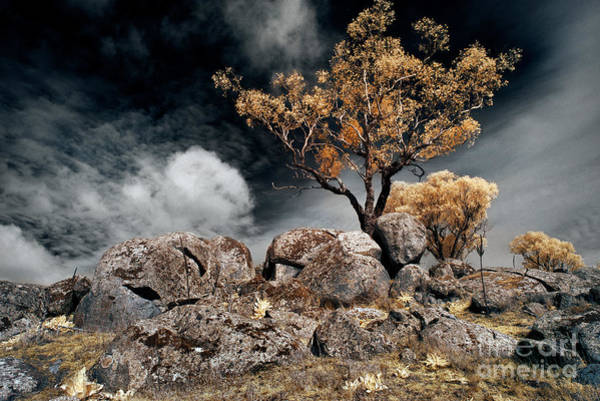 Photograph - Tree And Rocks by Russell Brown