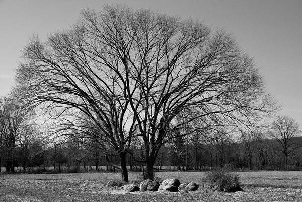 Somerset County Photograph - Tree And Sourland Mountain by Steven Richman