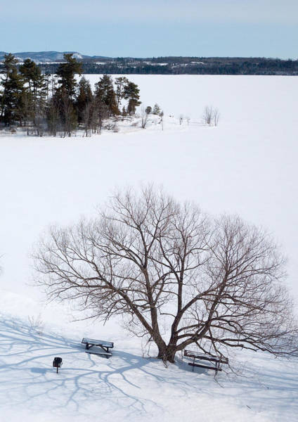 Photograph - Tree And The Point In Winter by Rob Huntley