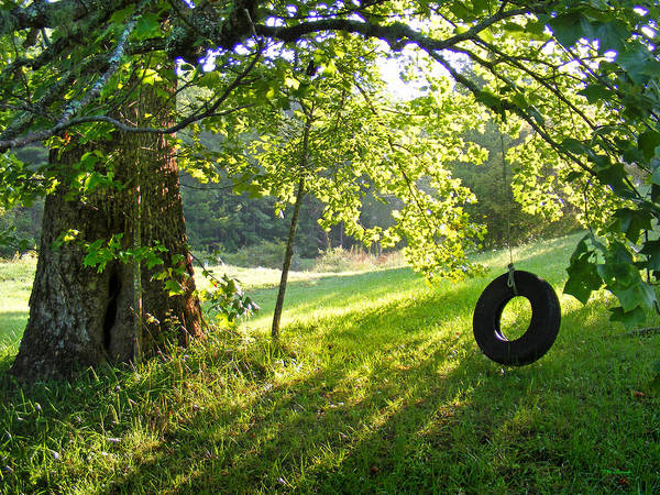 Tree And Tire Swing In Summer Art Print