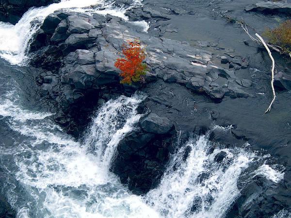 Triple Falls Photograph - Tree And Triple Falls by Daniel Hagerman