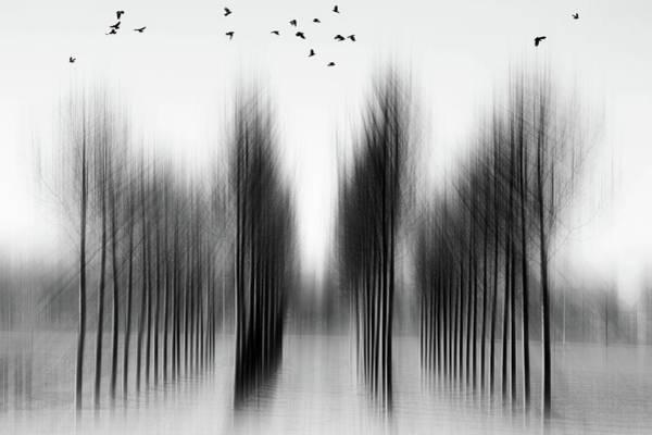 Blur Photograph - Tree Architecture by Roswitha Schleicher-schwarz