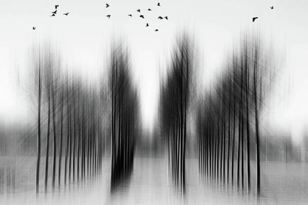 Blurred Wall Art - Photograph - Tree Architecture by Roswitha Schleicher-schwarz