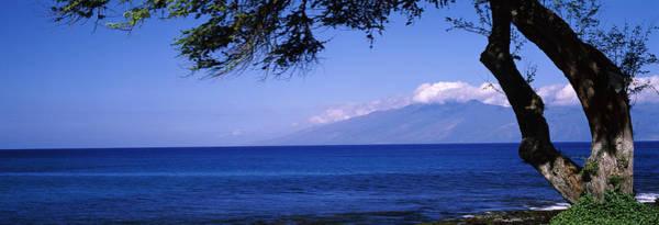 Kapalua Photograph - Tree At A Coast, Kapalua, Molokai by Panoramic Images