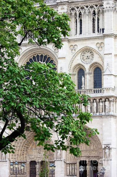Photograph - Tree At Notre Dame by Carol Groenen