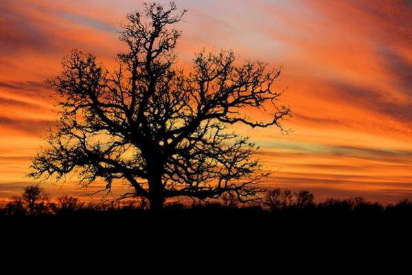 Artful Photograph - Tree At Sunset by Elizabeth Budd