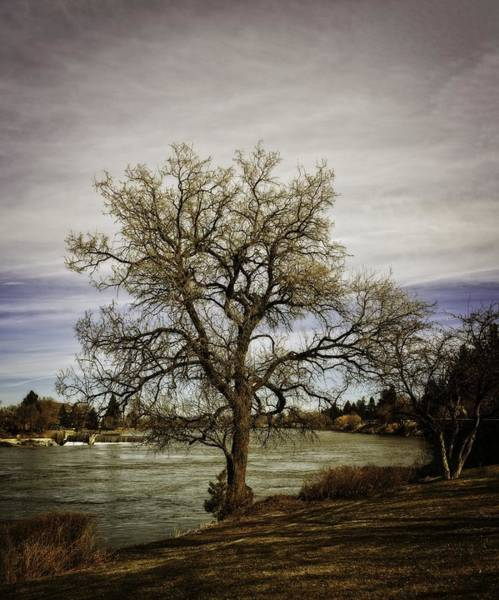 Bonneville County Photograph - Tree At Sunset by Image Takers Photography LLC - Carol Haddon
