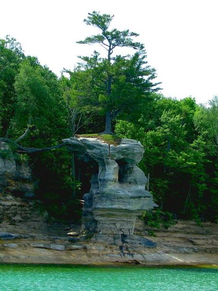 Photograph - Tree Atop Chapel Rock by Keith Stokes