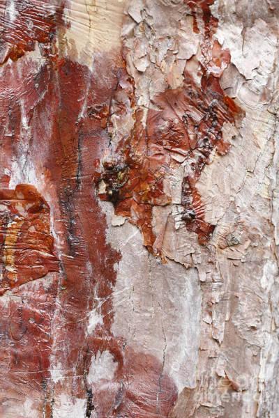 Photograph - Tree Bark by Paul Cowan