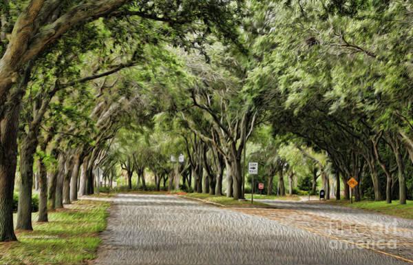 Port Orange Photograph - Tree Beauty by Deborah Benoit