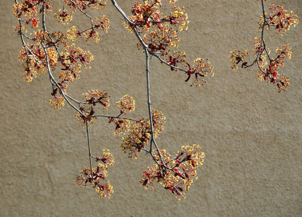 Photograph - Tree Blossoms. by Rob Huntley
