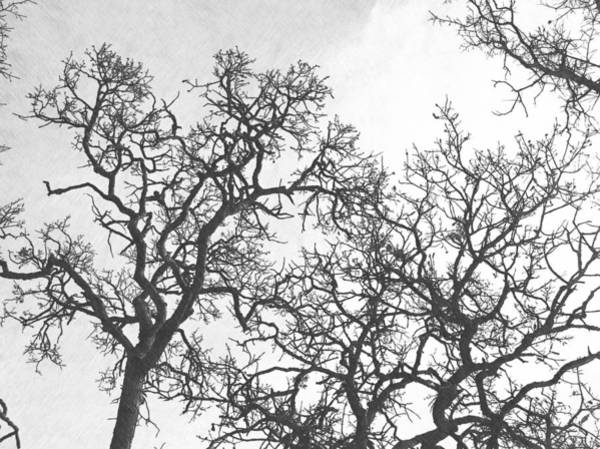 Photograph - Tree Branches by Frank Wilson