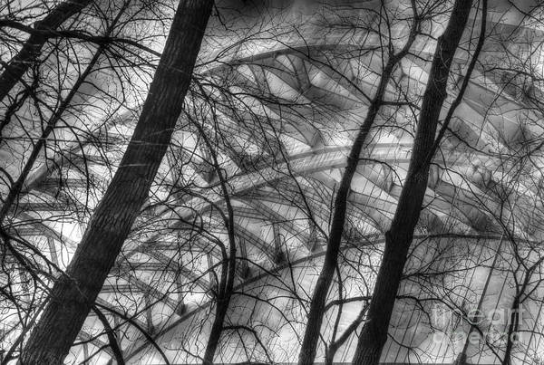 Photograph - Tree Bridge Designs Bw by Mel Steinhauer
