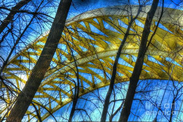 Photograph - Tree Bridge Designs by Mel Steinhauer