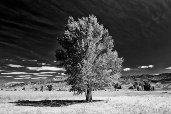 Photograph - Tree by Cat Connor
