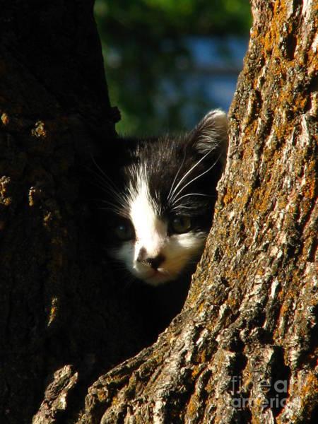 Patzer Photograph - Tree Cat by Greg Patzer