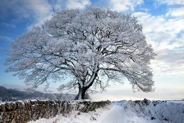 Wall Art - Photograph - Tree Covered In Hoar Frost by Alex Hyde
