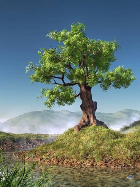 Digital Art - Tree by Daniel Eskridge