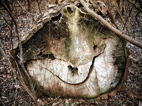 Photograph - Tree Face by Menega Sabidussi