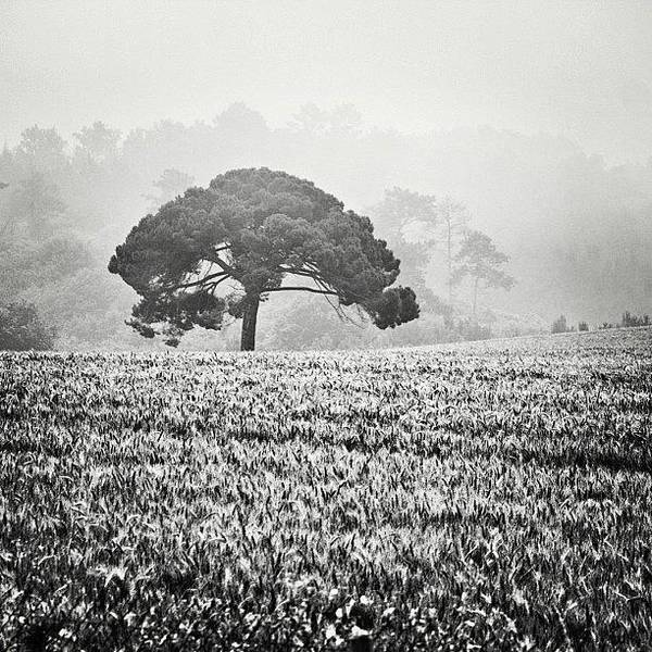 Blackandwhite Wall Art - Photograph - #tree #france #blackandwhite #bnw by Georgia Fowler