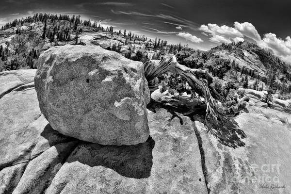 Photograph - Tree From Rock by Blake Richards