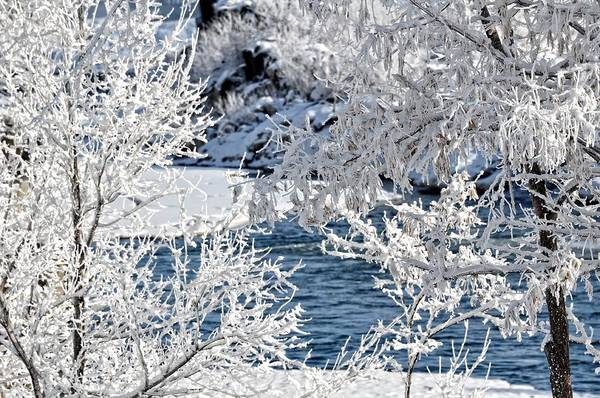 Bonneville County Photograph - Tree Frost by Image Takers Photography LLC - Laura Morgan