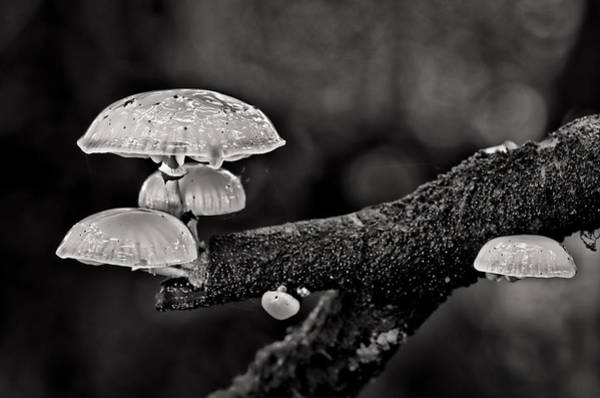 Photograph - Tree Fungi by Pete Hemington