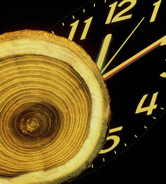 Tree Face Photograph - Tree Growth Rings And Clock Face by Sheila Terry/science Photo Library