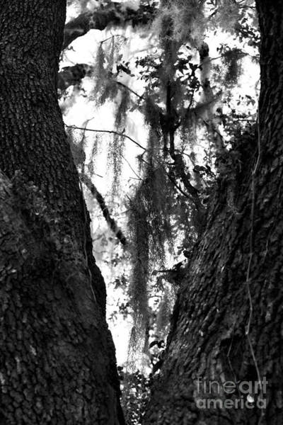 Photograph - Tree Heart by John Rizzuto