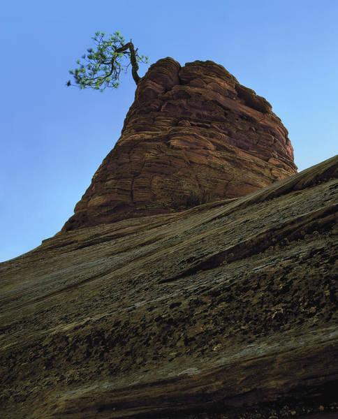 Photograph - Tree Hoodoo by Paul Breitkreuz
