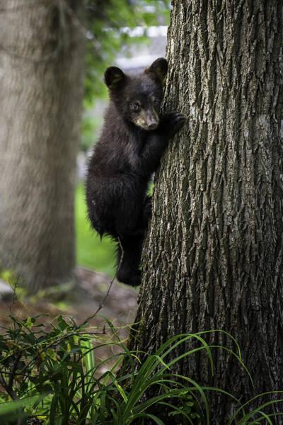 Photograph - Tree Hugger by Sara Hudock
