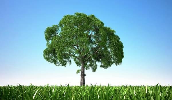 Grass Tree Digital Art - Tree In A Field, Artwork by Leonello Calvetti