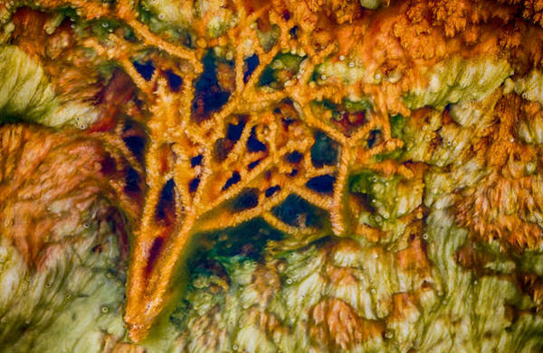 Photograph - Tree In A Park Hot Springs by Scott Campbell