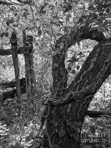 Photograph - Tree In Black And White by Jeff Breiman