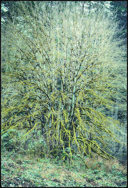 Photograph - Tree In Blue And Green by Belinda Greb