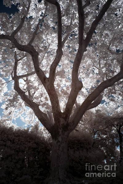 Photograph - Tree In God's Garden by John Rizzuto