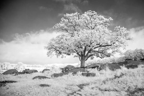 Photograph - Tree In Ir  8d00141 by Guy Whiteley