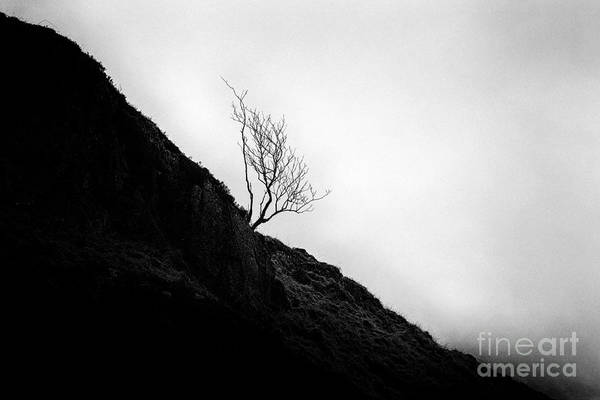Glencoe Photograph - Tree In Mist by John Farnan