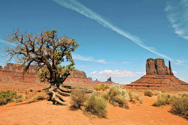 Southwest Usa Photograph - Tree In Monument Valley Tribal Park by Pavliha