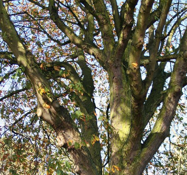 Tree In Sunlight Art Print