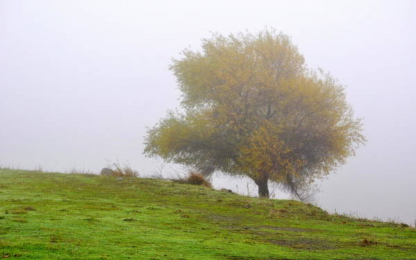 Photograph - Tree In The Fog by AJ  Schibig
