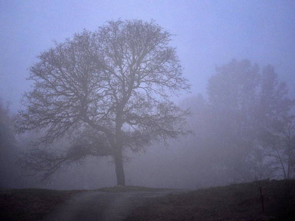 Photograph - Tree In The Mist by AJ  Schibig