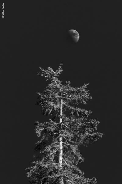 Photograph - Tree In The Night by Alexander Fedin
