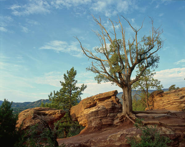Photograph - Tree In The Rocks by Richard Smith