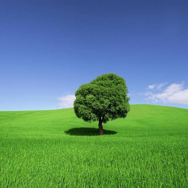 Photograph - Tree In Weat Field, Spring by Deimagine