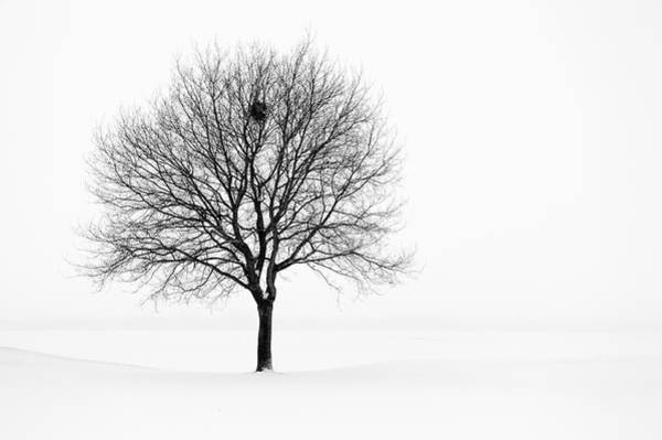 Photograph - Tree In Winter Landscape, Black And by Nikitje