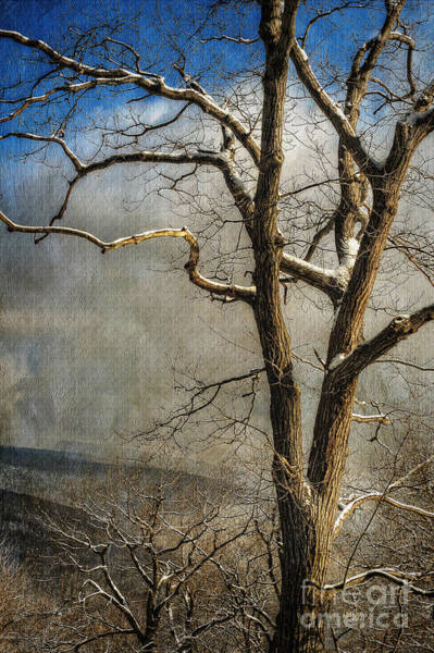 Photograph - Tree In Winter by Lois Bryan