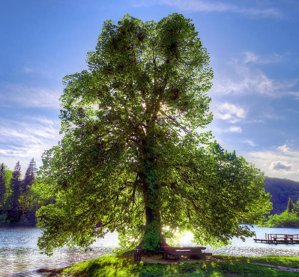 Photograph - Tree by Ivan Slosar