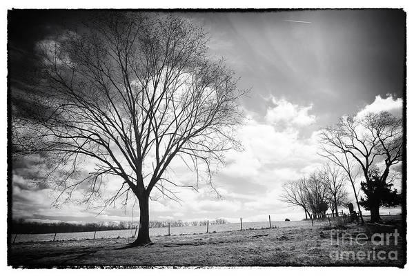 Photograph - Tree by John Rizzuto