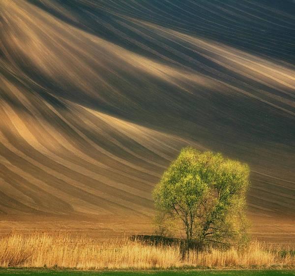 Dirt Photograph - Tree... by Krzysztof Browko